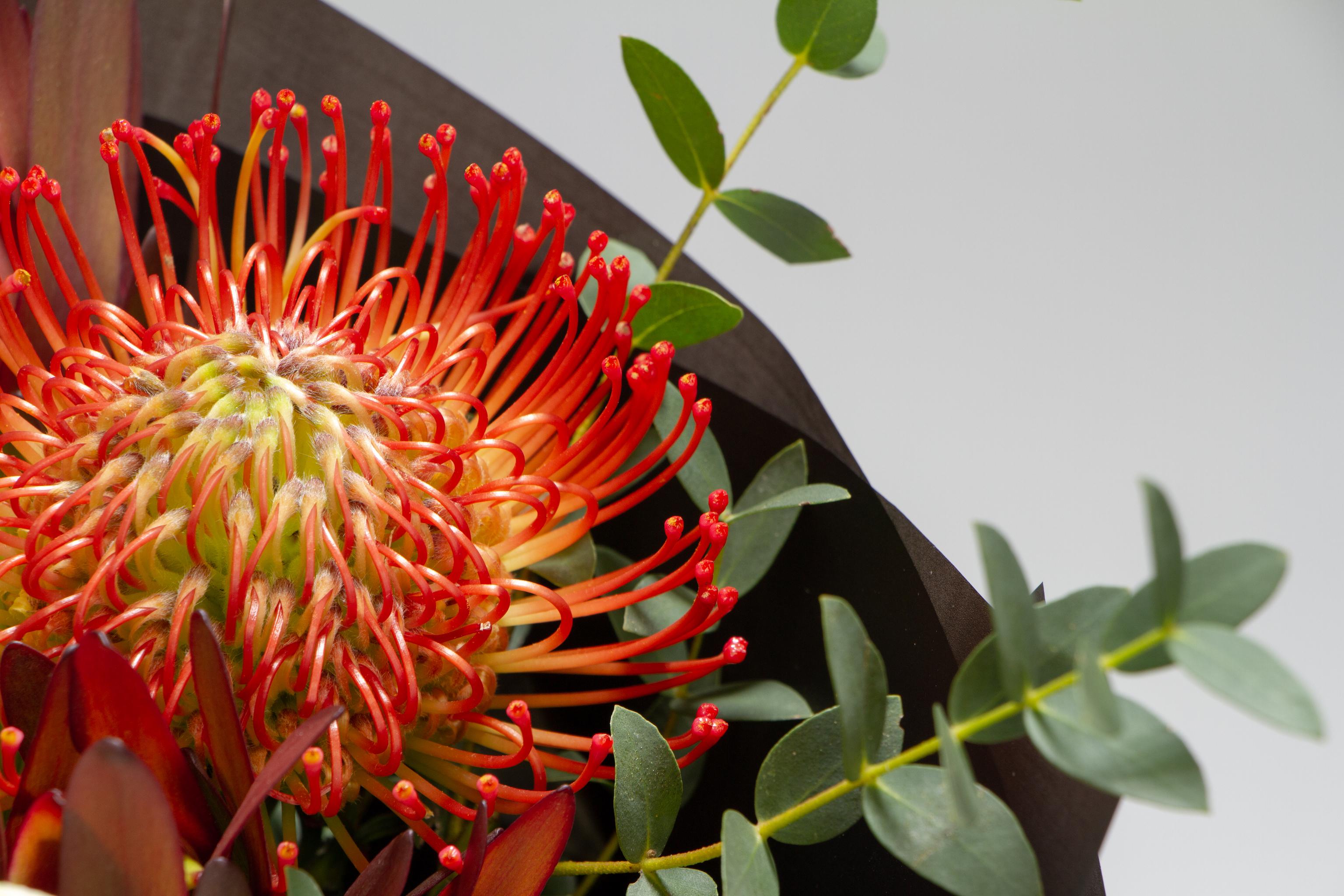 Detail,Closeup,Fresh,Bouquet,Of,Hippeastrum,,Leucospermum,,Leucodendron,,Eucalyptus,On
